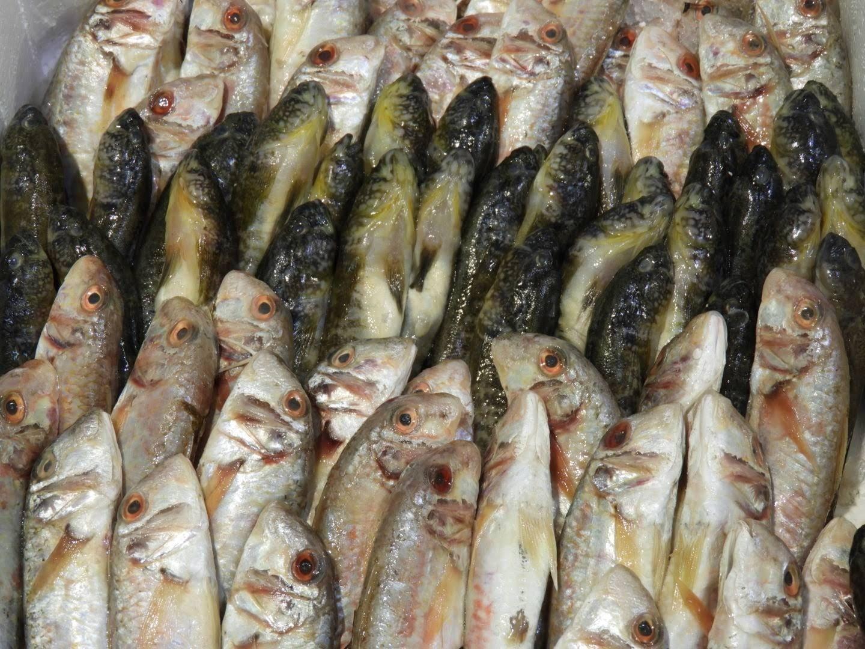 Seafood markets Sardinia